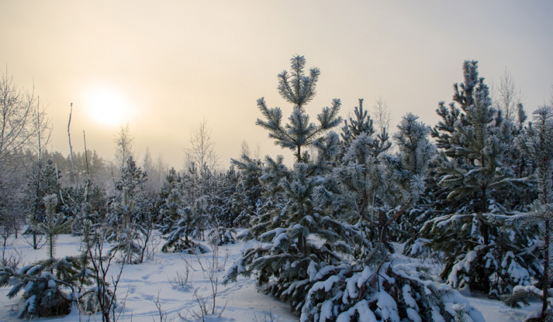 День зимнего солнцестояния в 2019 году: какого числа, история, приметы